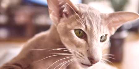 Sladké dospívající kočička vids
