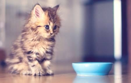 ženské kočička obrázky