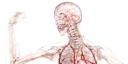 Ljudska anatomija - grafikon strukture tijela muškaraca i